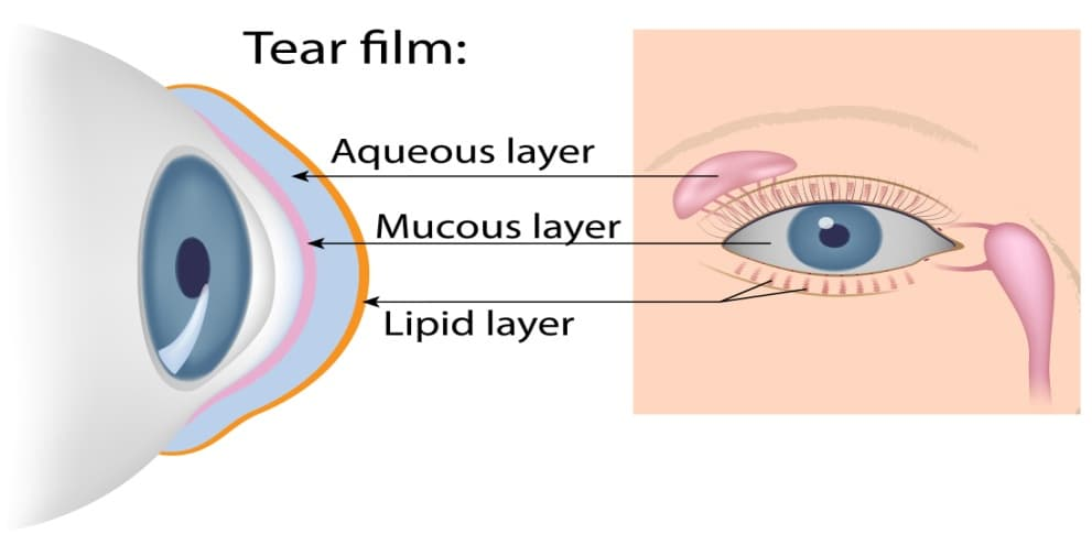 Illustration of the tear film of the eye